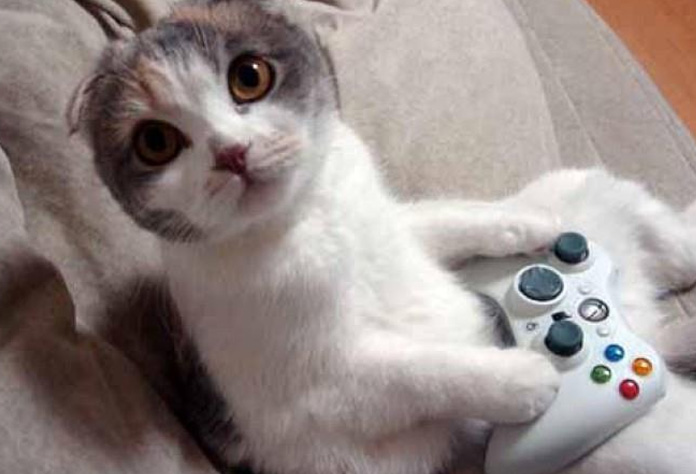 cats-videogames